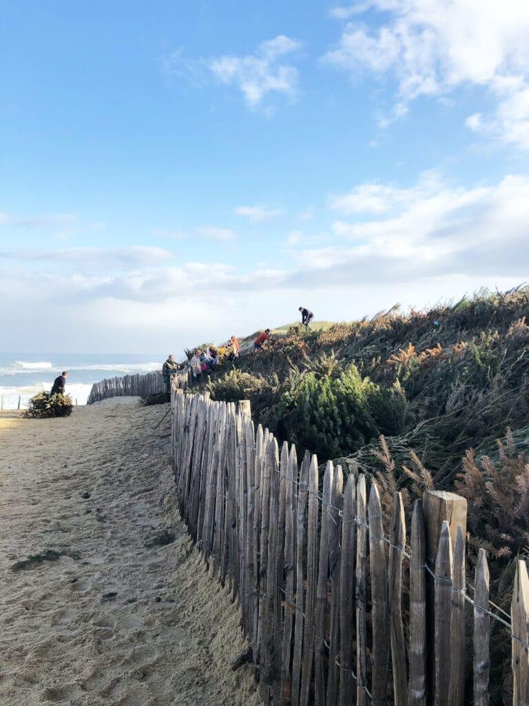 chantier citoyen pose sapin pour la dune capbreton landes