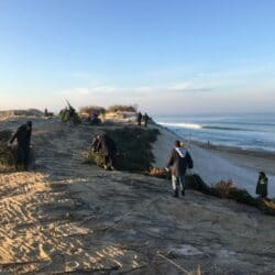recyclage un sapin pour la dune Capbreton Landes